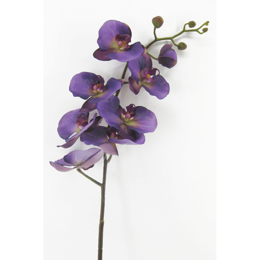 Orchidee Phalaenopsis Premium XL Blütenzweig lila 106cm